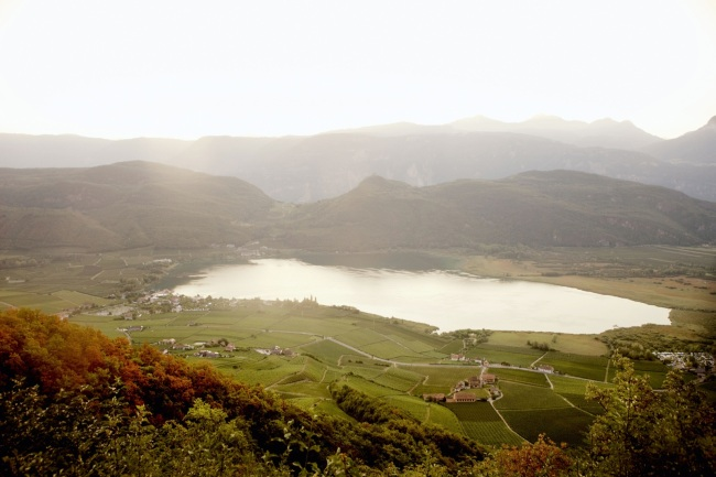"""bilder für die Kellerei """" erste & neue"""" in Kaltern , Südtirol"""